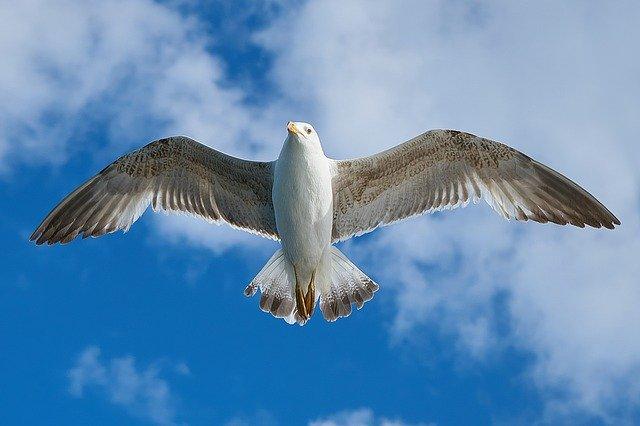 seagull-1511862_640